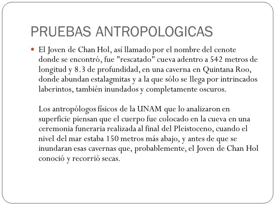 PRUEBAS ANTROPOLOGICAS El Joven de Chan Hol, así llamado por el nombre del cenote donde se encontró, fue