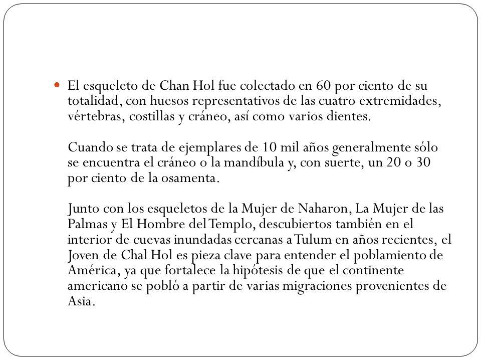 El esqueleto de Chan Hol fue colectado en 60 por ciento de su totalidad, con huesos representativos de las cuatro extremidades, vértebras, costillas y