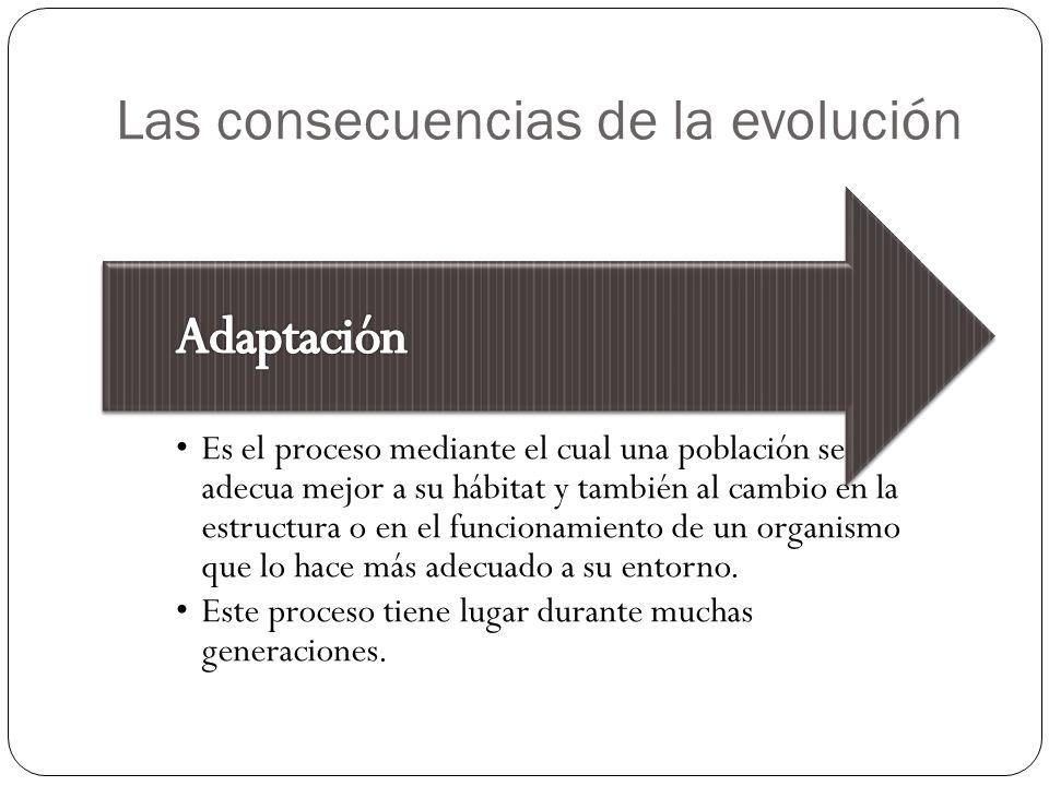 Las consecuencias de la evolución Es el proceso mediante el cual una población se adecua mejor a su hábitat y también al cambio en la estructura o en