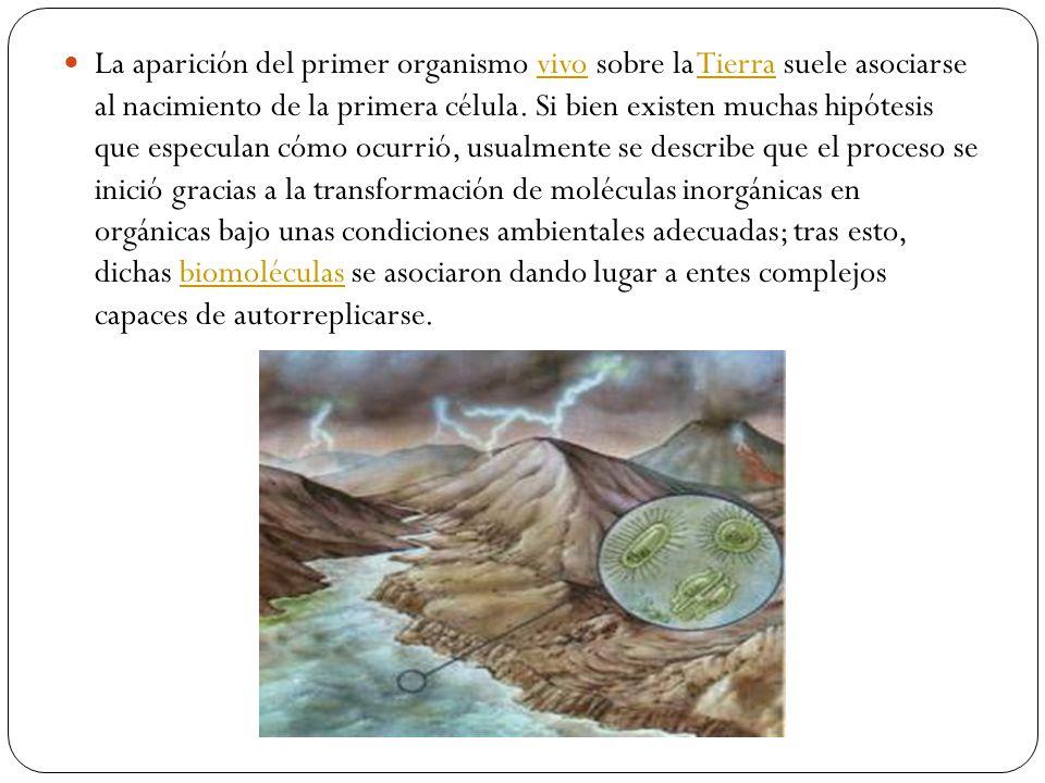 EXPERIMENTO DE MILLER Y UREY Esquema del sistema ideado por Miller-Urey en el que se demuestra que se pueden sintetizar moléculas orgánicas complejas a partir de otras más simples, cuando estas últimas se someten a condiciones supuestamente similares a las de la Tierra primigenia.