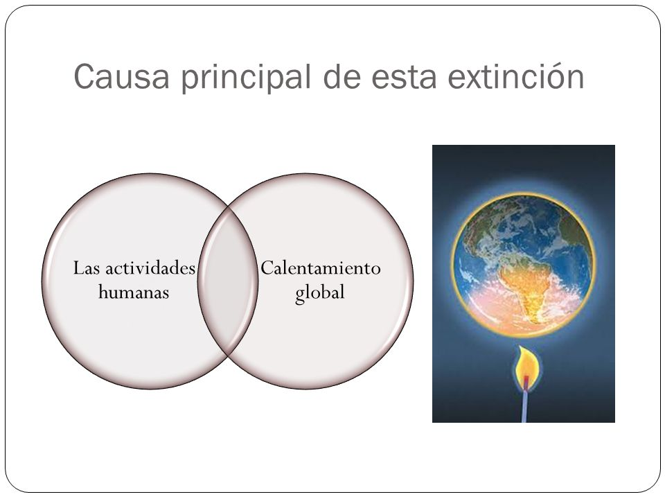 Causa principal de esta extinción Las actividades humanas Calentamiento global