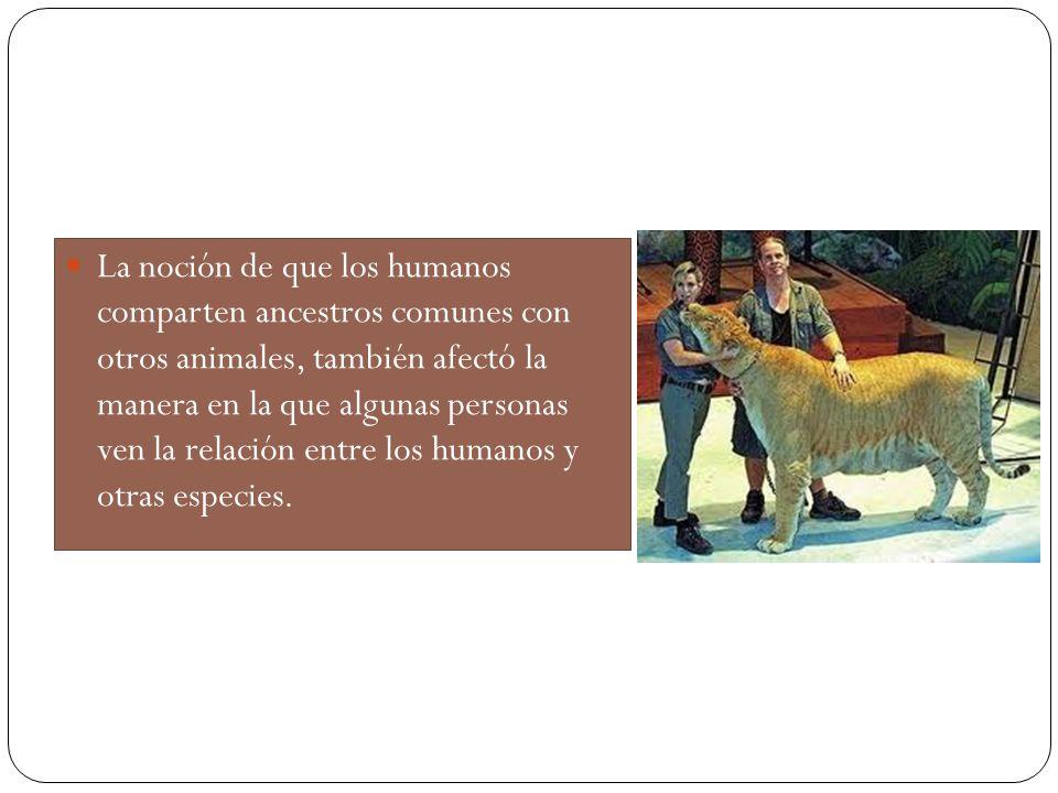 La noción de que los humanos comparten ancestros comunes con otros animales, también afectó la manera en la que algunas personas ven la relación entre