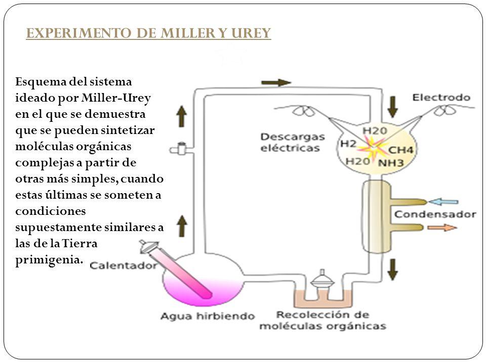 EXPERIMENTO DE MILLER Y UREY Esquema del sistema ideado por Miller-Urey en el que se demuestra que se pueden sintetizar moléculas orgánicas complejas