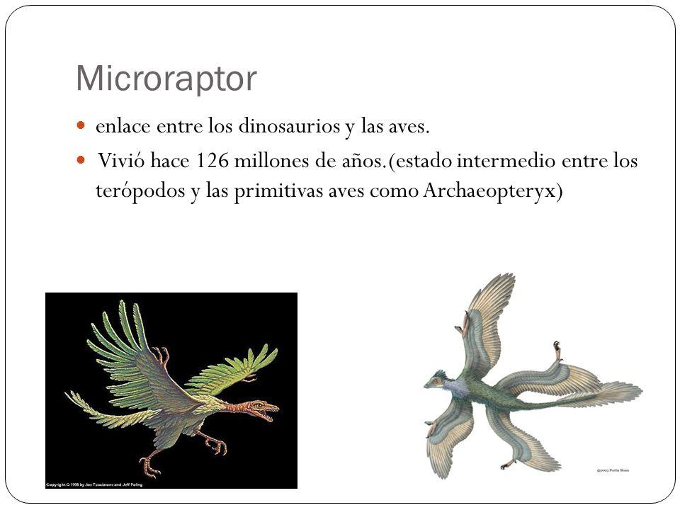 enlace entre los dinosaurios y las aves. Vivió hace 126 millones de años.(estado intermedio entre los terópodos y las primitivas aves como Archaeopter
