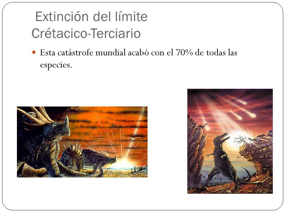 Esta catástrofe mundial acabó con el 70% de todas las especies. Extinción del límite Crétacico-Terciario