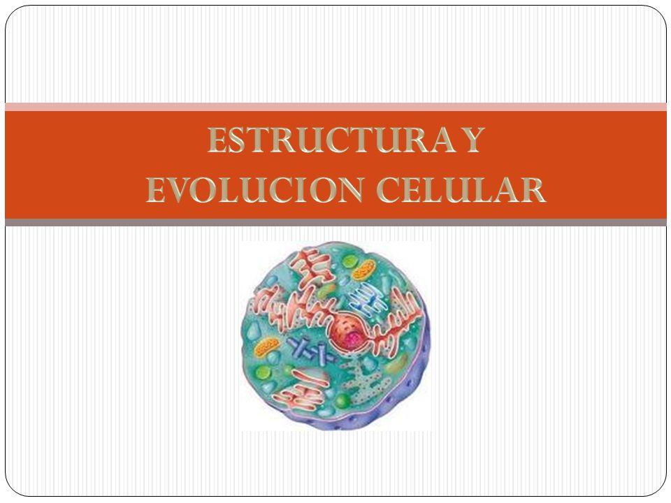 LA CELULA Definición Podemos definir a la célula como la unidad morfológica y funcional de todo ser vivo.