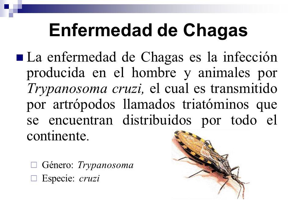 Enfermedad de Chagas La enfermedad de Chagas es la infección producida en el hombre y animales por Trypanosoma cruzi, el cual es transmitido por artró