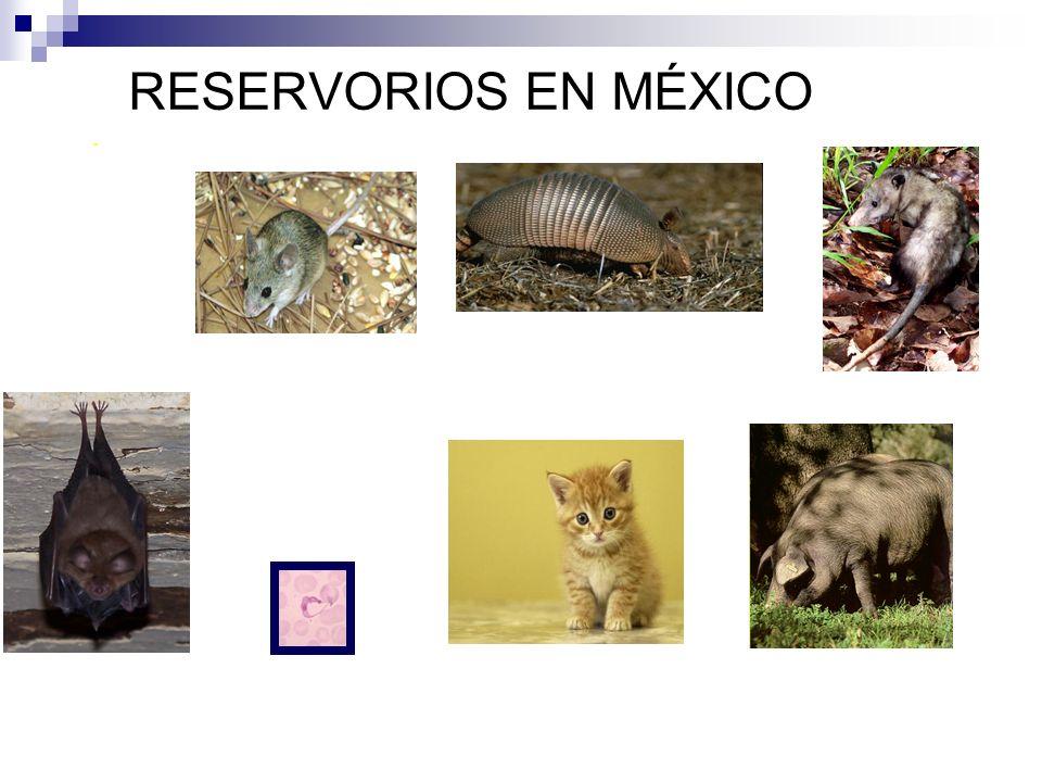 RESERVORIOS EN MÉXICO. entre otros.