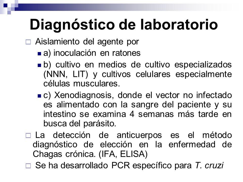 Diagnóstico de laboratorio Aislamiento del agente por a) inoculación en ratones b) cultivo en medios de cultivo especializados (NNN, LIT) y cultivos c