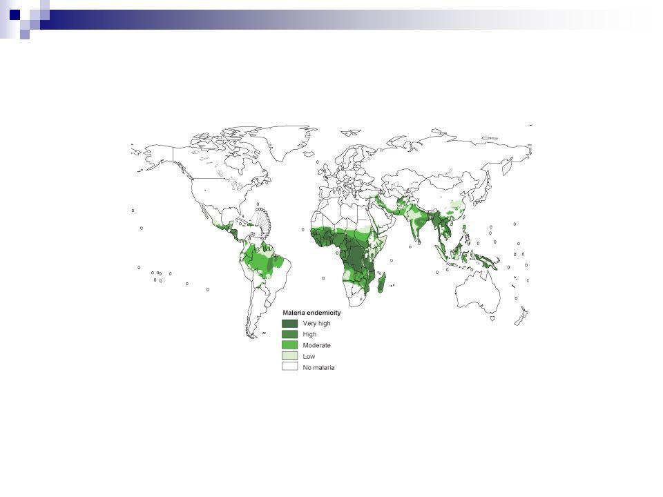 Vector Triatoma infestans