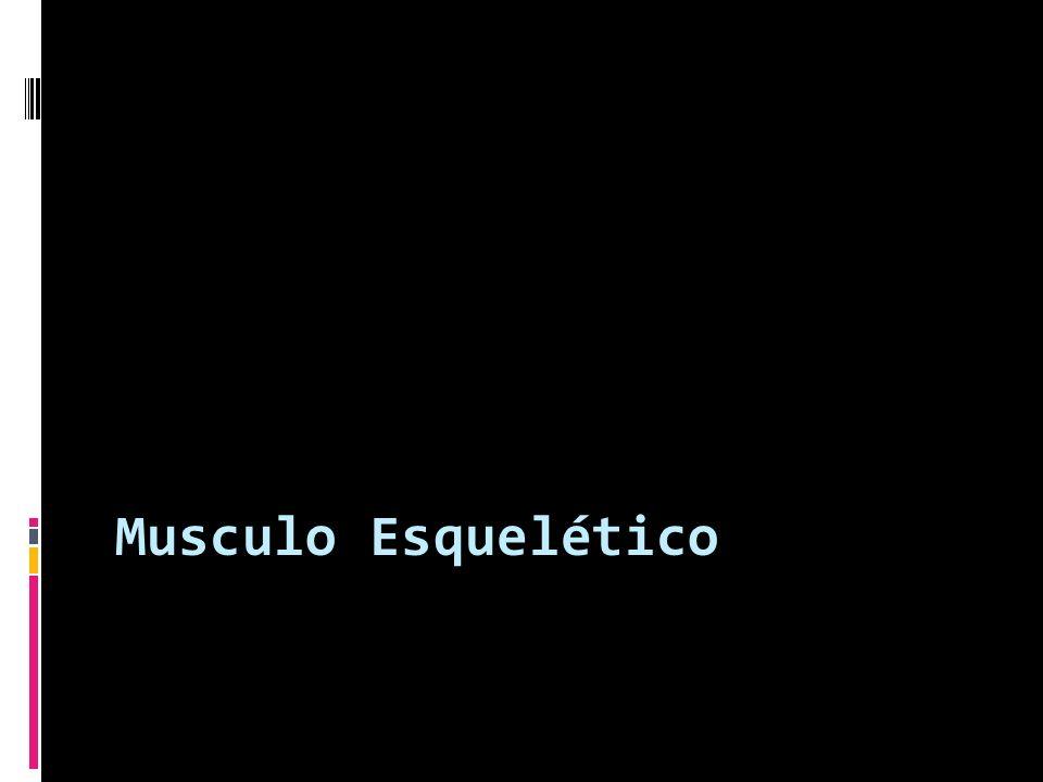 Musculo Esquelético
