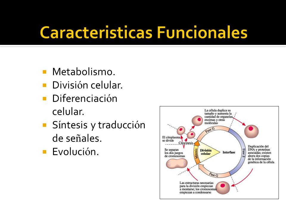 Metabolismo. Divisi ó n celular. Diferenciaci ó n celular. S í ntesis y traducci ó n de se ñ ales. Evoluci ó n.