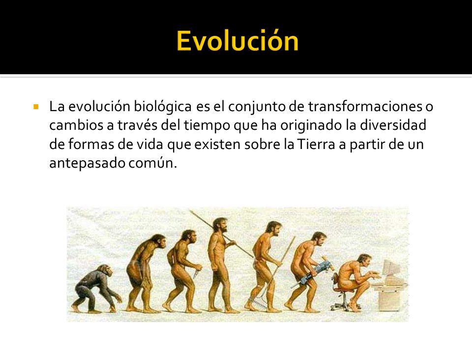 La evolución biológica es el conjunto de transformaciones o cambios a través del tiempo que ha originado la diversidad de formas de vida que existen s