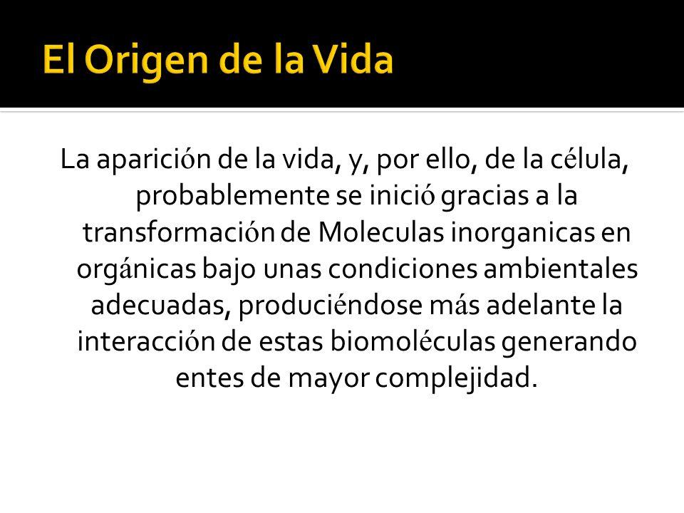 La aparici ó n de la vida, y, por ello, de la c é lula, probablemente se inici ó gracias a la transformaci ó n de Moleculas inorganicas en org á nicas