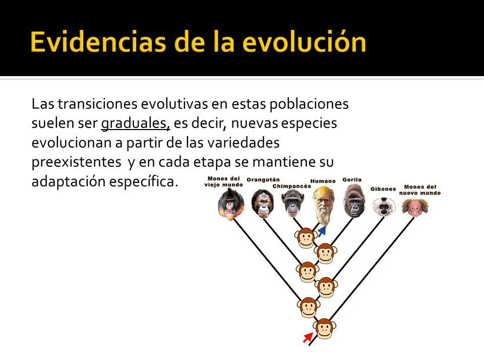 Las transiciones evolutivas en estas poblaciones suelen ser graduales, es decir, nuevas especies evolucionan a partir de las variedades preexistentes