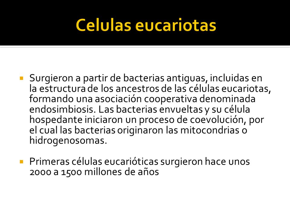Surgieron a partir de bacterias antiguas, incluidas en la estructura de los ancestros de las células eucariotas, formando una asociación cooperativa d