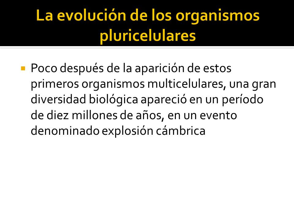 Poco después de la aparición de estos primeros organismos multicelulares, una gran diversidad biológica apareció en un período de diez millones de año