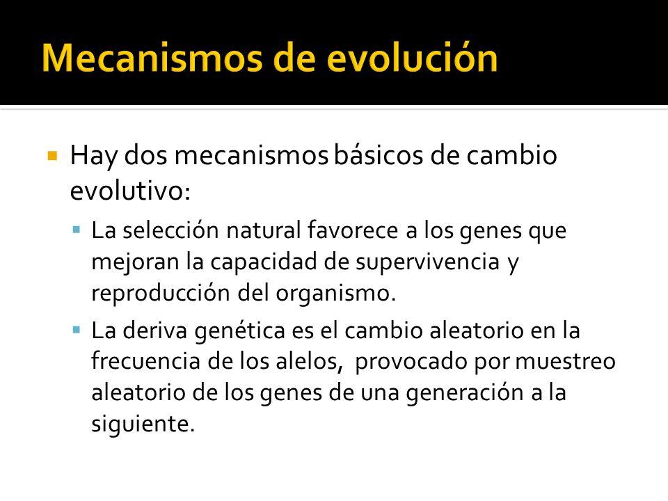 Hay dos mecanismos básicos de cambio evolutivo: La selección natural favorece a los genes que mejoran la capacidad de supervivencia y reproducción del