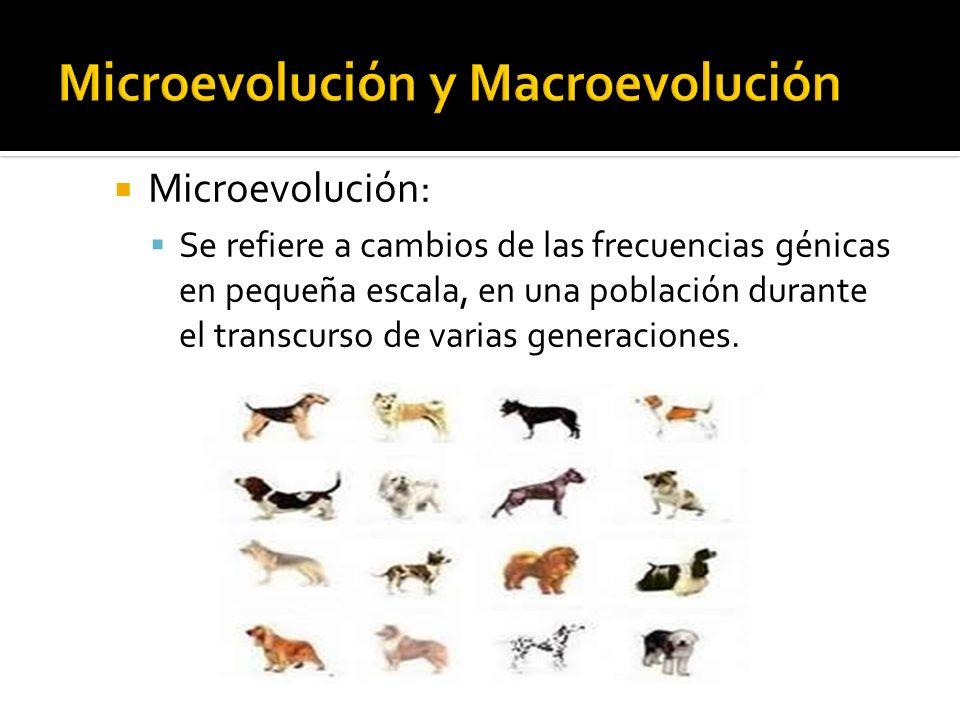 Microevolución: Se refiere a cambios de las frecuencias génicas en pequeña escala, en una población durante el transcurso de varias generaciones.