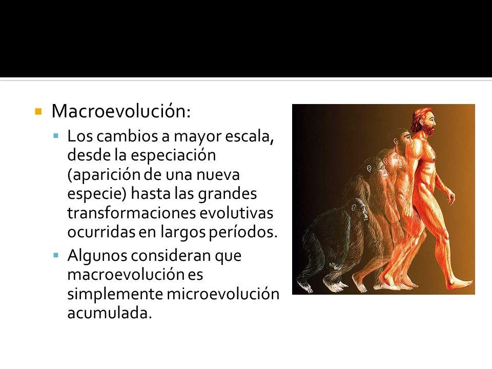 Macroevolución: Los cambios a mayor escala, desde la especiación (aparición de una nueva especie) hasta las grandes transformaciones evolutivas ocurri