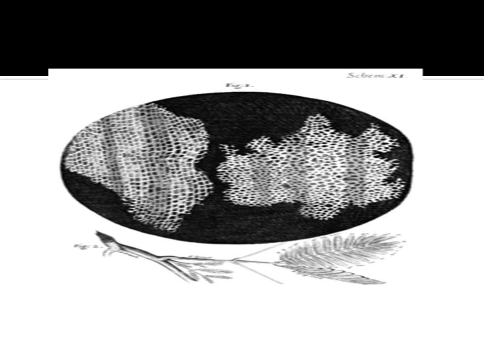 Theodor Schwann y Matthias Schleiden en 1830 postularon la teor í a celular.