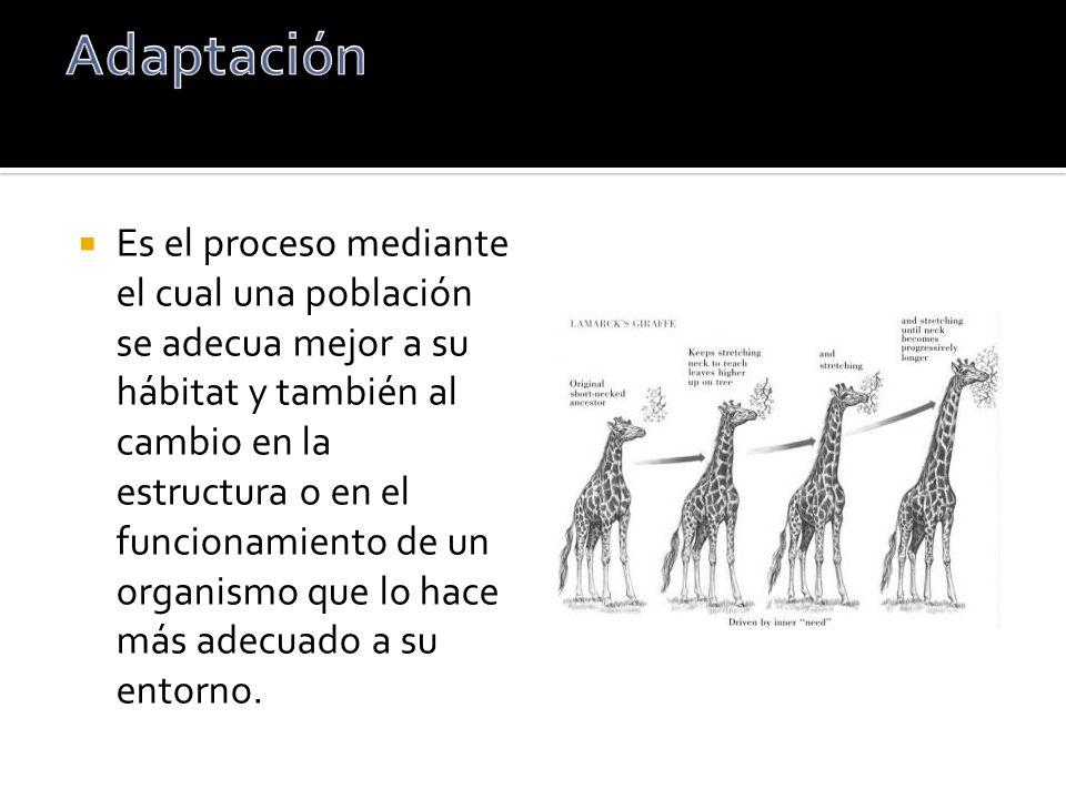 Es el proceso mediante el cual una población se adecua mejor a su hábitat y también al cambio en la estructura o en el funcionamiento de un organismo