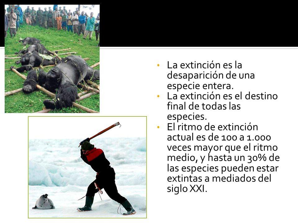La extinción es la desaparición de una especie entera. La extinción es el destino final de todas las especies. El ritmo de extinción actual es de 100