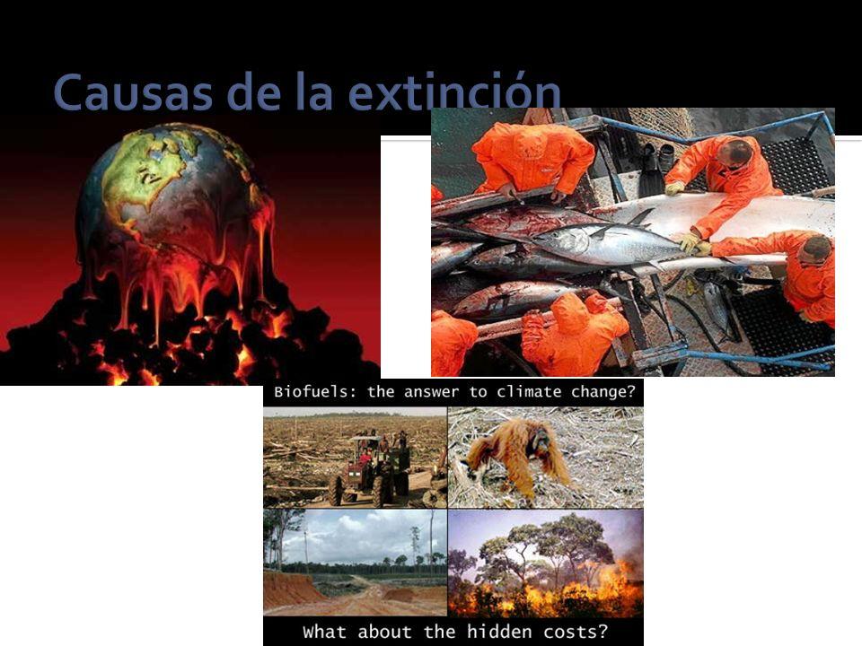 Extinción masiva Cuando una gran cantidad de especies se extinguen en un plazo geológicamente breve.
