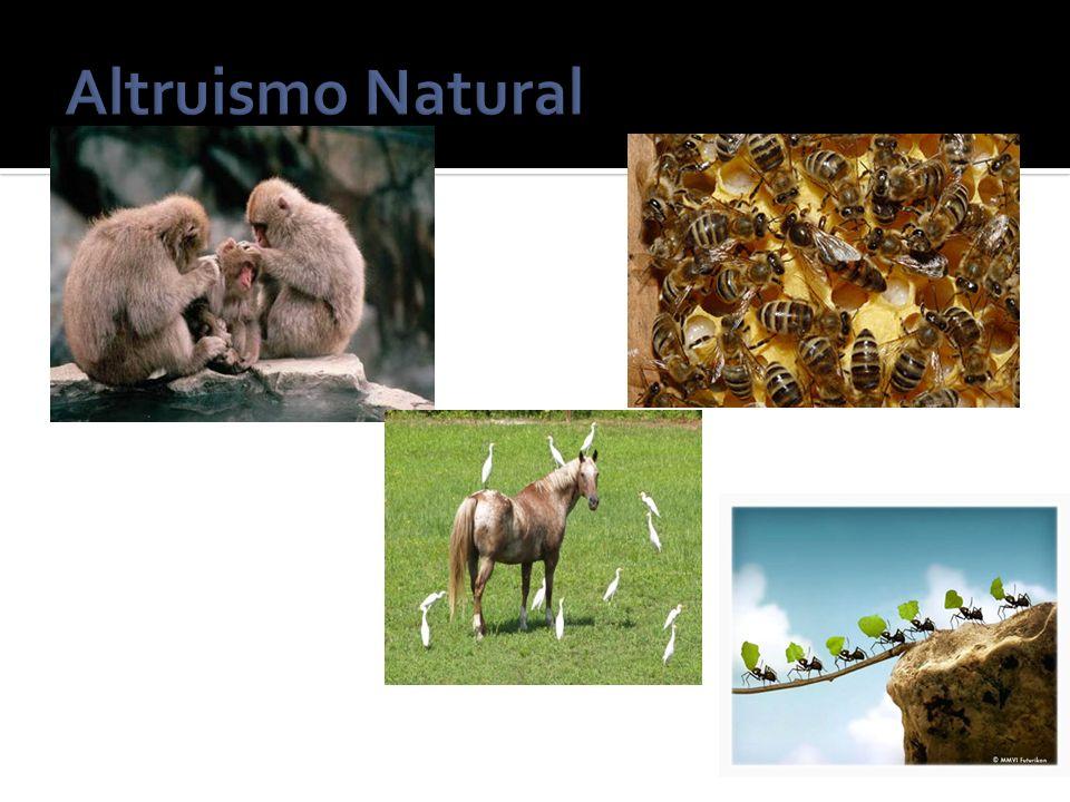 La aparición de la teoría evolutiva.