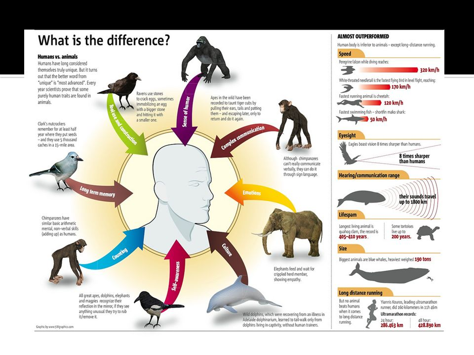 A pesar de las abrumadoras evidencias que avalan la teoría de la evolución, algunos grupos, interpretan en la Biblia que un ser divino creó directamente a los seres humanos, y a cada una de las otras especies animales, como especies separadas y acabadas.
