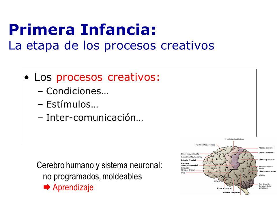 Los procesos creativos: –Condiciones… –Estímulos… –Inter-comunicación… Primera Infancia: La etapa de los procesos creativos Cerebro humano y sistema n