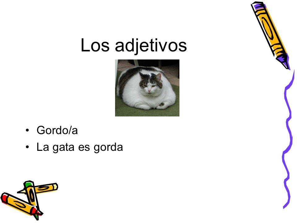 Los adjetivos Gordo/a La gata es gorda