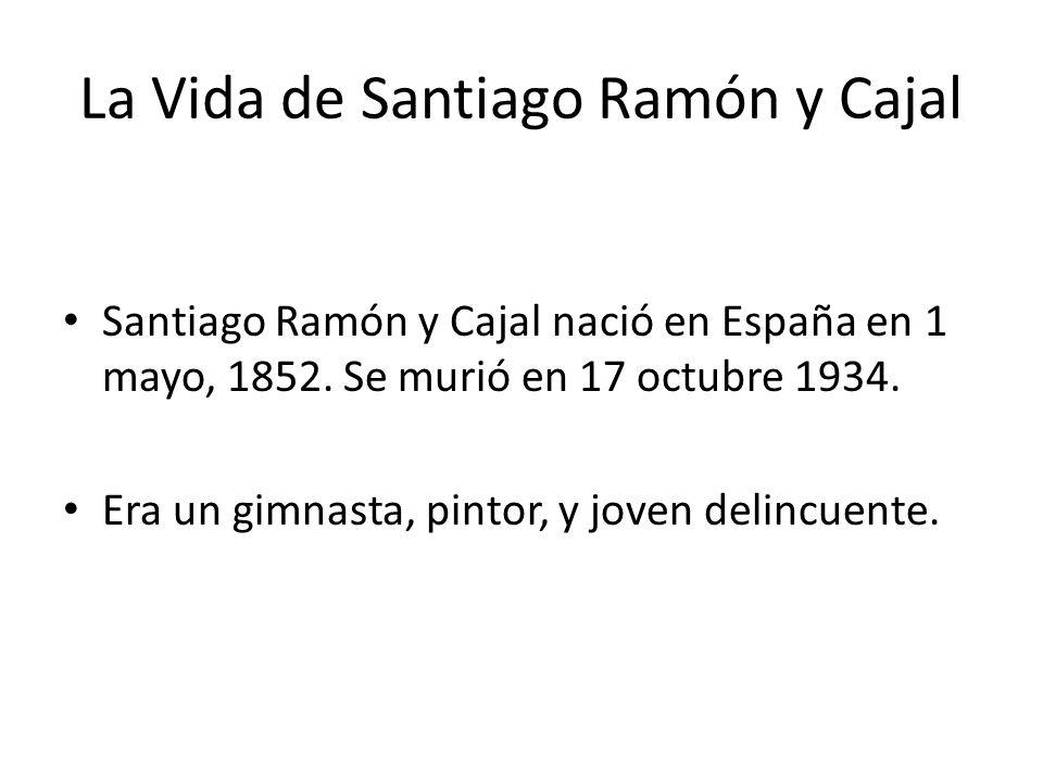 La Vida de Santiago Ramón y Cajal Santiago Ramón y Cajal nació en España en 1 mayo, 1852.