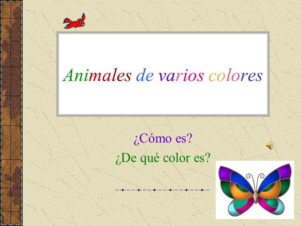 Animales de varios colores ¿Cómo es? ¿De qué color es?