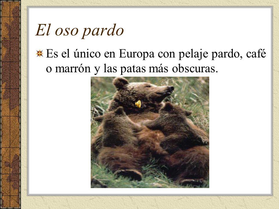 Más animales...De América del Sur y Las Antillas.