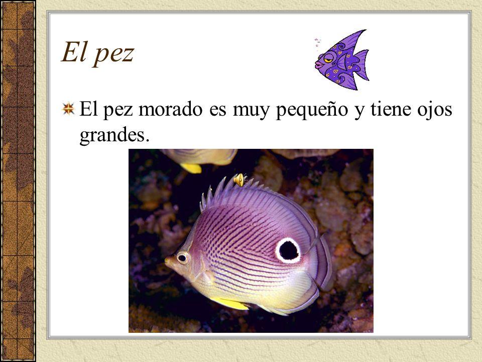 El pez El pez morado es muy pequeño y tiene ojos grandes.