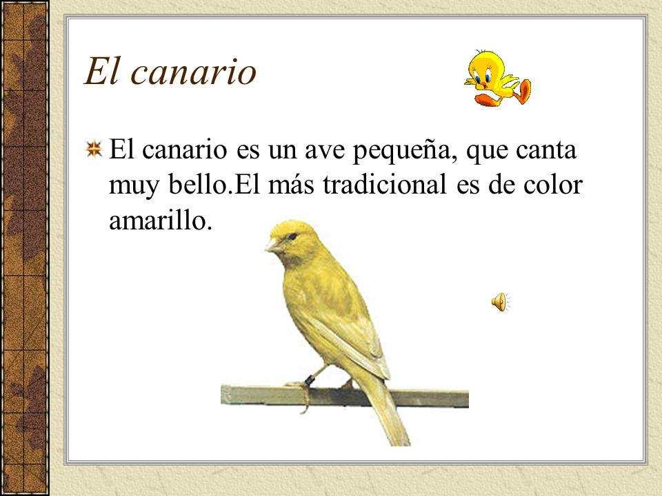 El canario El canario es un ave pequeña, que canta muy bello.El más tradicional es de color amarillo.