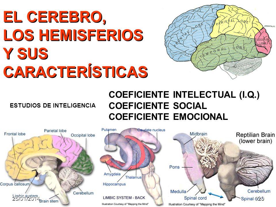 EL CEREBRO, LOS HEMISFERIOS Y SUS CARACTERÍSTICAS ESTUDIOS DE INTELIGENCIA COEFICIENTE INTELECTUAL (I.Q.) COEFICIENTE SOCIAL COEFICIENTE EMOCIONAL 25/