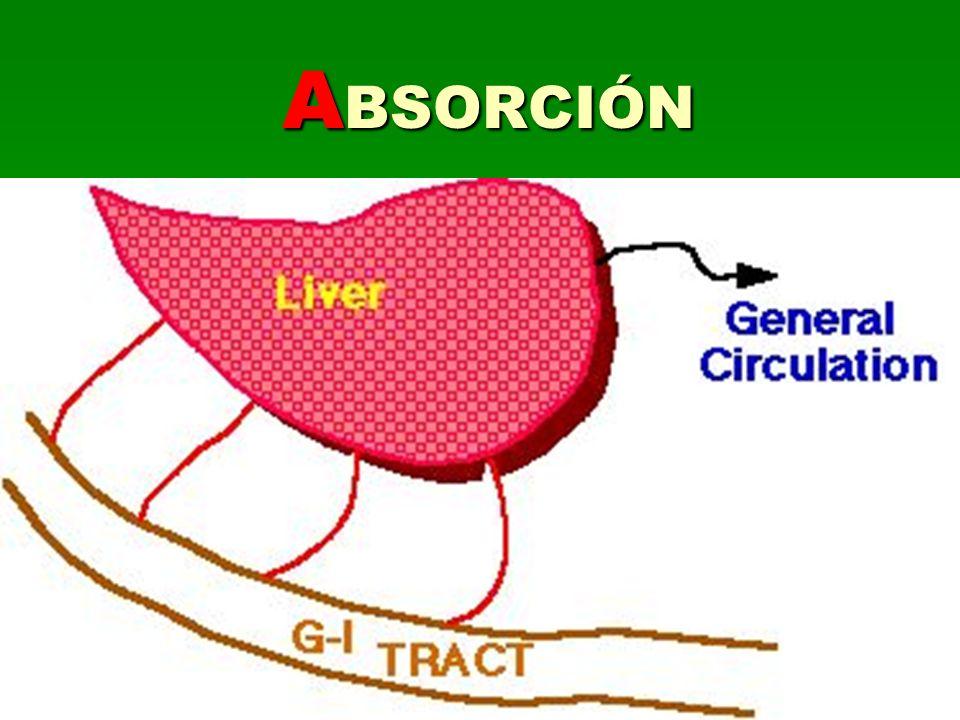 Reacciones que modifican el principio activo: Facilitar la excreción Incorporación al metabolismo del individuo Tipos: Fase I: Oxidación, Reducción e Hidrólisis REL: citocromo P450 REL: citocromo P450 Fase II: Conjugación M ETABOLIZACIÓN