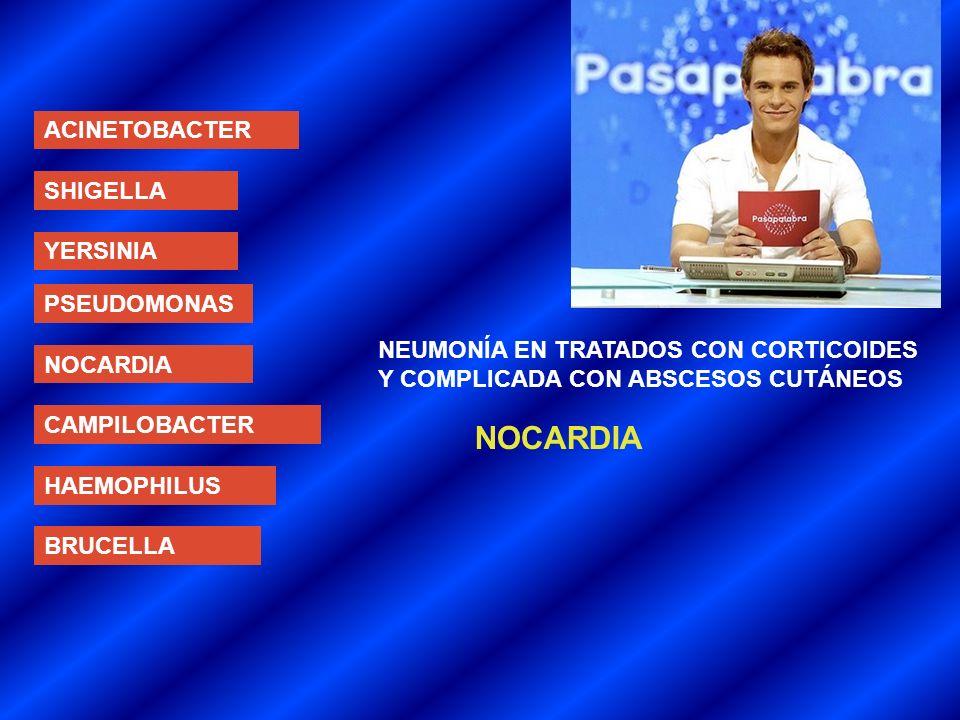 ACINETOBACTER SHIGELLA YERSINIA PSEUDOMONAS NOCARDIA CAMPILOBACTER HAEMOPHILUS BRUCELLA NEUMONÍA EN TRATADOS CON CORTICOIDES Y COMPLICADA CON ABSCESOS CUTÁNEOS NOCARDIA