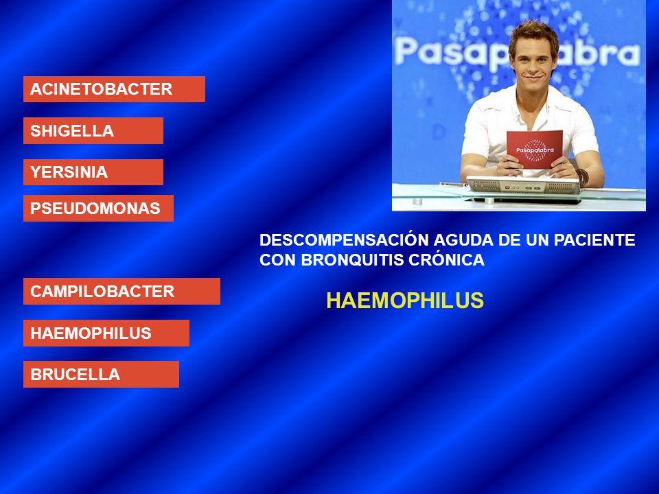 ACINETOBACTER SHIGELLA YERSINIA PSEUDOMONAS CAMPILOBACTER HAEMOPHILUS BRUCELLA DESCOMPENSACIÓN AGUDA DE UN PACIENTE CON BRONQUITIS CRÓNICA HAEMOPHILUS