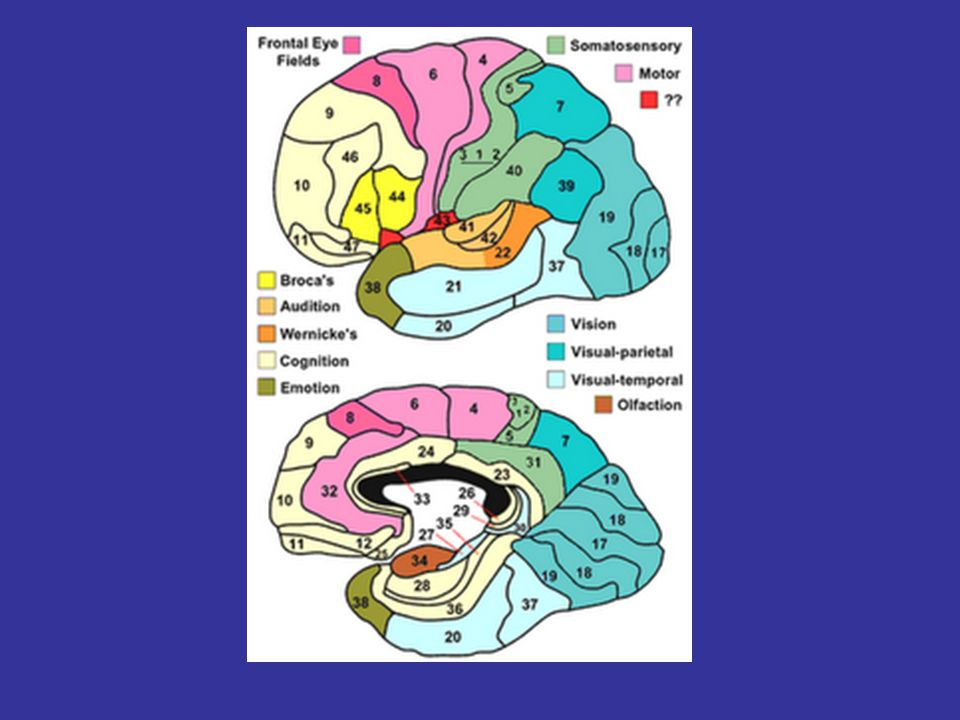 NEUROLOGÍA PROPIOCEPCIÓN: -RECEPTORES PERIFÉRICOS -NERVIO PERIFÉRICO -RAÍZ POSTERIOR -CORDONES POSTERIORES (HOMOLATERAL) -NÚCLEOS DE GOLL Y BURDACH.