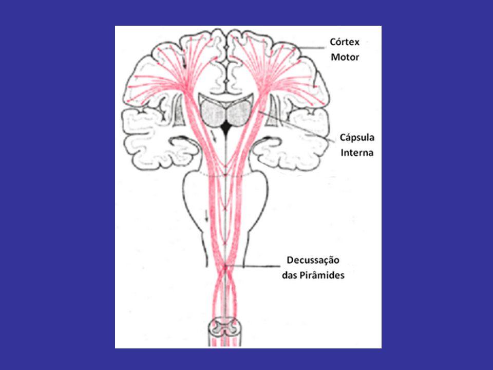 NEUROLOGÍA VIA EXTRAPIRAMIDAL -GANGLIOS BASALES (ESTRIADO, S.NEGRA, G.PÁLIDO…) -DOPAMINA – GABA -CONTROL TÁLAMO – CORTEZA MOTORA