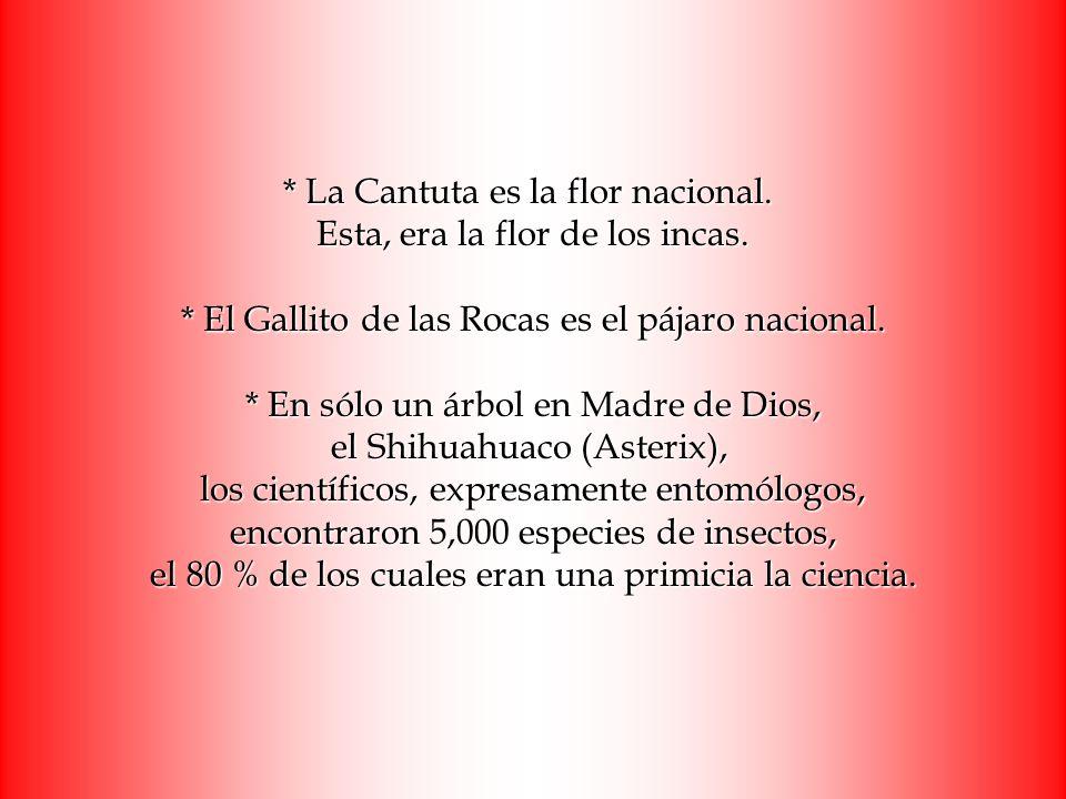 * La Cantuta es la flor nacional. Esta, era la flor de los incas. * El Gallito de las Rocas es el pájaro nacional. * En sólo un árbol en Madre de Dios