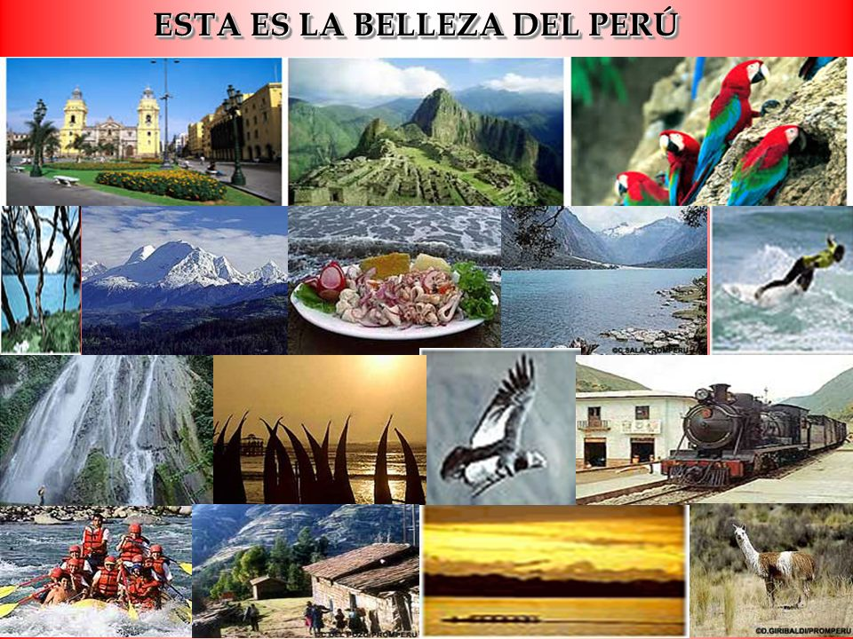 * En la región oriental de los Andes uno puede encontrar más de 3.000 variedades de diversas orquídeas de las cuales hay 2.000.