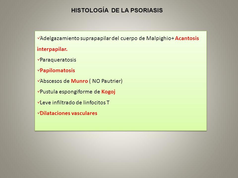 Adelgazamiento suprapapilar del cuerpo de Malpighio+ Acantosis interpapilar. Paraqueratosis Papilomatosis Abscesos de Munro ( NO Pautrier) Pustula esp