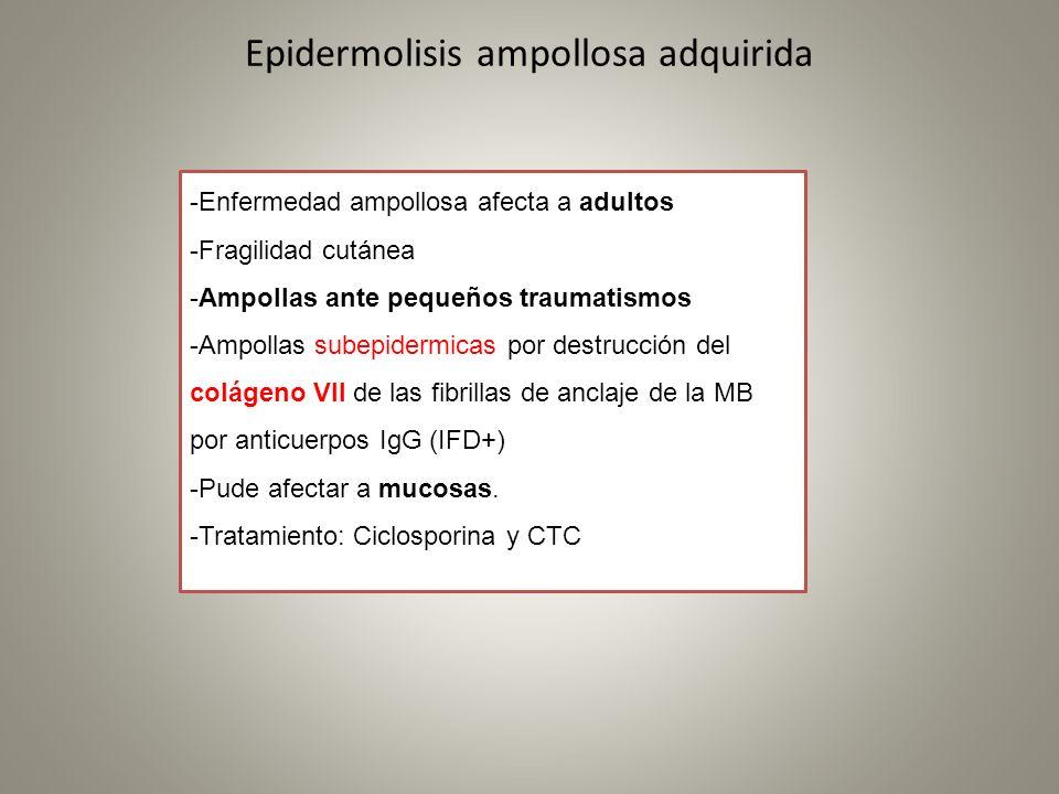 Epidermolisis ampollosa adquirida -Enfermedad ampollosa afecta a adultos -Fragilidad cutánea -Ampollas ante pequeños traumatismos -Ampollas subepiderm