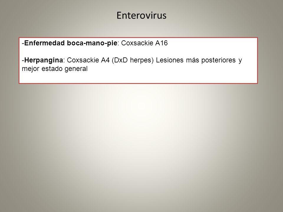Enterovirus -Enfermedad boca-mano-pie: Coxsackie A16 -Herpangina: Coxsackie A4 (DxD herpes) Lesiones más posteriores y mejor estado general