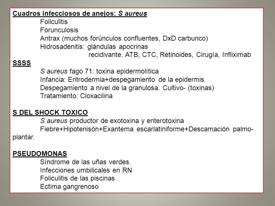 Cuadros infecciosos de anejos: S aureus Foliculitis Forunculosis Antrax (muchos forúnculos confluentes, DxD carbunco) Hidrosadenitis: glándulas apocri
