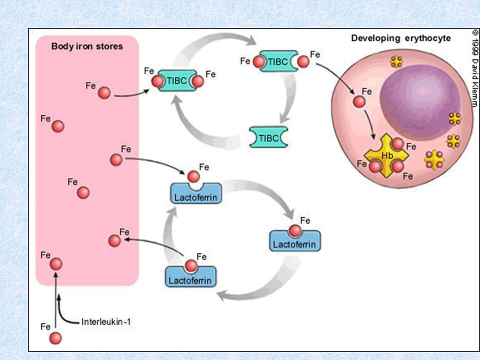LLA L1 Marcadores: Transferasa terminal y CD10
